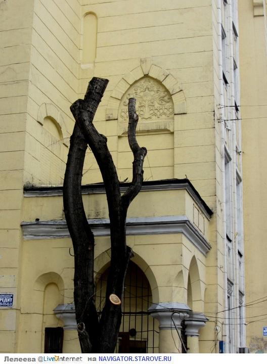 Образ дерева без листьев преследует дом и поныне